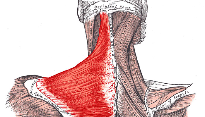Cervical Strain A Common Cause Of Neck And Shoulder Pain